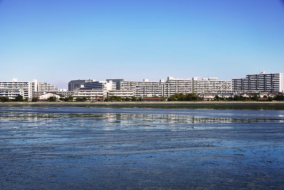 習志野市谷津干潟周辺の画像